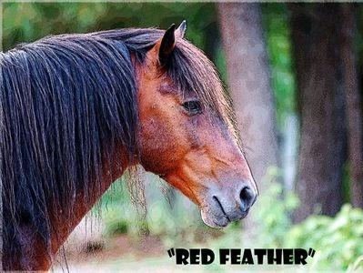 Virginia Wild Horse Rescue